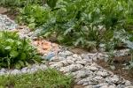 Low Res_Mirko Canesi_Cornucopia_2017_Climbing holds, plastic drainage tiles, metal screws_Orti Ghiglio produce garden, Parco delle Cave, Milan_ Photo Delfino Sisto Legnani e Marco Cappel