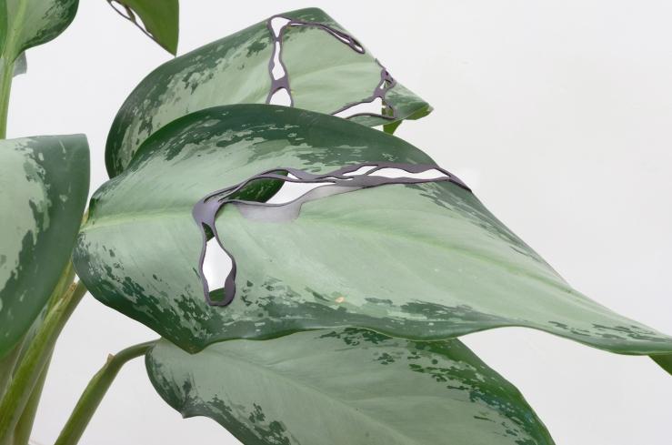 Plant, 2017, magnetic film, plasticine, variable dimensions